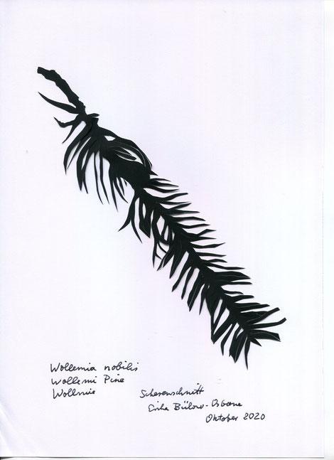 Scherenschnitt Wollemia Nobilis Zweig