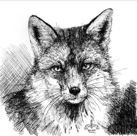 Fuchs Zeichnung