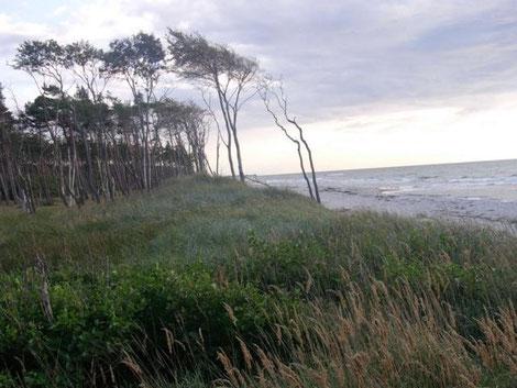 Der Wind formt die Küste