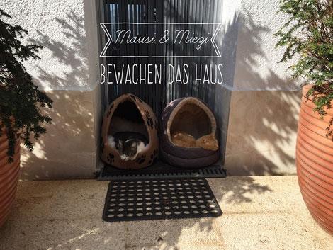 Mausi und Miezi bewachen den Hauseingang