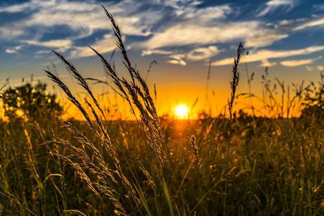 Sonne und Sonnenschein bei der Gänsejagd