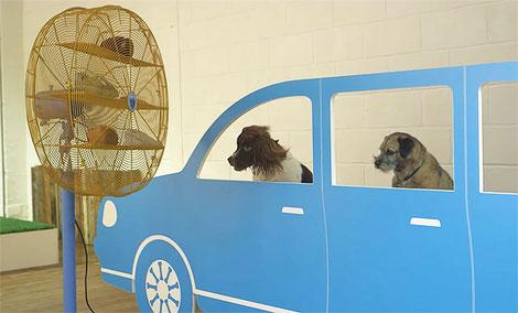 Perros simulando que van de viaje