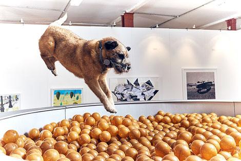 Piscina de bolas para perros