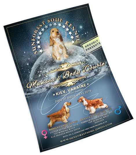 English cocker spaniel; beautiful advertising animals dogs design; creative animals dogs advertising poster design; luxury animals dogs advertising poster design; 2017; order; online; Sunforest Soul Kennel; FCI; UKU; Ukrainian Kennel Union; PRS LA BEAUTY;