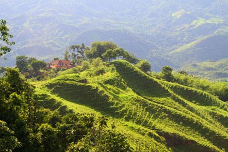 Marsella Kaffeedörfer Kolumbien Kaffeedreieck Ausflüge Aktiv