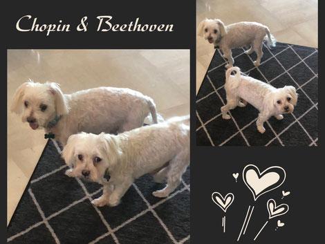 CHOPIN & BEETHOVEN adoptés en Novembre 2018