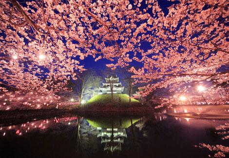 写ッセ さくら大賞  No.40069 桜と城 斎藤 正幸(上越市)