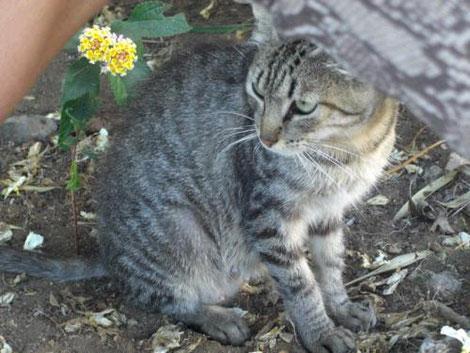 Homöopathische Mittel bei Katzenschnupfen