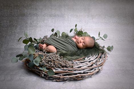 newbornshoot hellevoetsluis