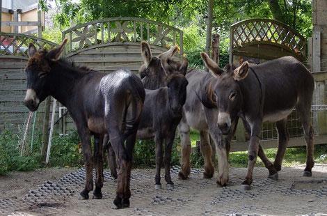 Sommer 2013 von links nach rechts: Le Chaim, Abraham, Samuel & Ephraim
