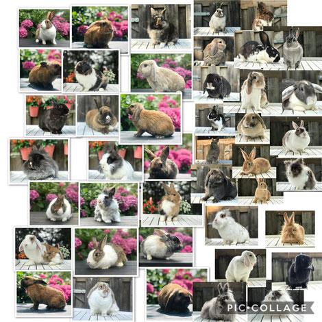 Opvang konijntjes maand September