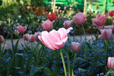 Gartenreise, Normandie, Kulturreise