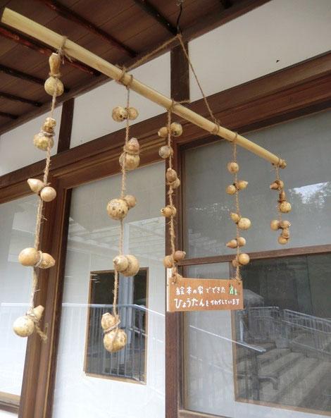 11月5日(2014) 吊るされた瓢箪(ひょうたん):星と森と絵本の家(国立天文台内)の軒先に吊るされた瓢箪。工作教室用にかわかしているのでしょうか?