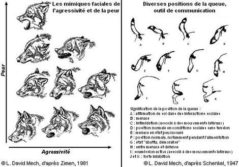 Source: http://www.loup.developpement-durable.gouv.fr/spip.php?rubrique13