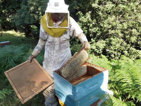 Bastien au rucher Cévennes