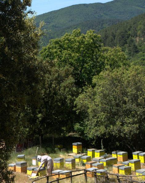 Bastien au rucher, Cevennes