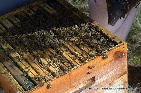 ruche ouverte abeilles de Bastien ALISE visite au rucher