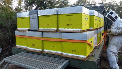 Transhumance des ruches - apiculture