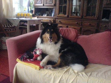 """Graf"" Adoro residiert auf Doris ihrem Sofa"