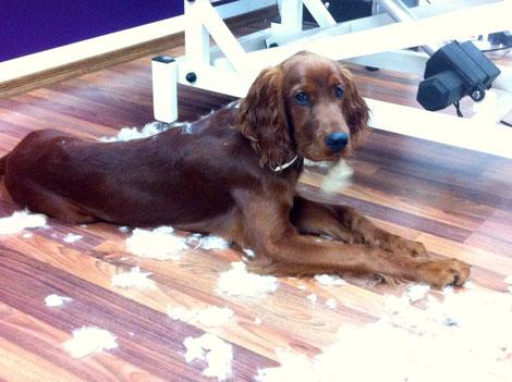 5 Monate Bei der Arbeit als Salonhund