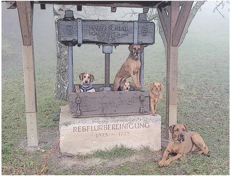 Neujahrsgassi am Lemberg - 7-Eichen mit den Braunen.