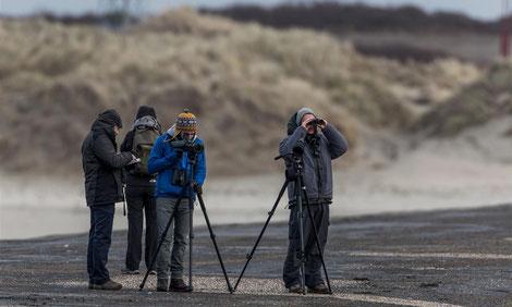 Zeeland birding trip 2014