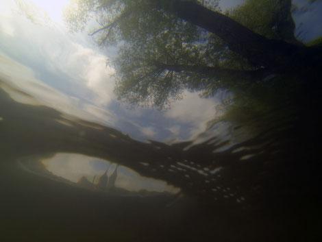 Quand la caméra sous marine de l'artiste Valera explore la vue dans le Danube à Regensburg en Allemagne