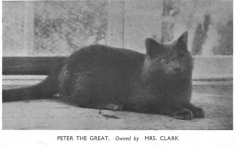 кот Peter the Great 1902 год