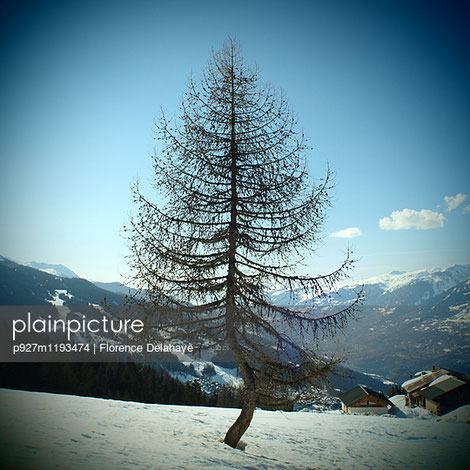 p927m1193474;Alps  Good weather  Silence Bare  Horizon  Single tree Beautiful  Landscape  Sky Beauty in nature  Larch  Slope Bizarre  Leafless  Snow Blank Space  Lookout  Sunshine Blue  Mountain village  Symmetry Blue sky  Mountains  Tranquility Buckled