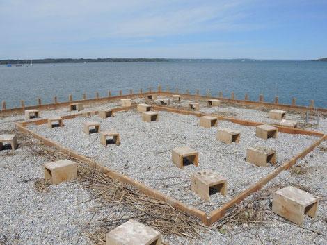 Foto: Durch die Entfernung der Abdeckung wurden im mittleren Bereich zusätzliche Brutplätze für die Flussseeschwalben freigegeben (c) Franz Wimmer