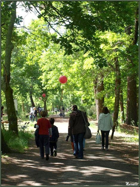 Un des sentiers de promenade du Parc de la Chêneraie à Gujan-Mestras (Bassin d'Arcachon)