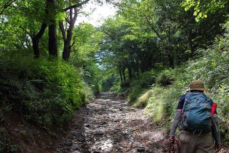 工程の2/3は、緩傾斜で歩きやすい登山道だった