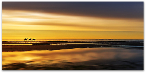Naturerlebnis Reiten an der Nordseeküste vor der Insel Sylt - Traumurlaub mit Hund