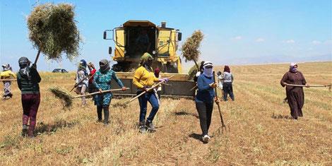 Landbrugskooperative i Rojava