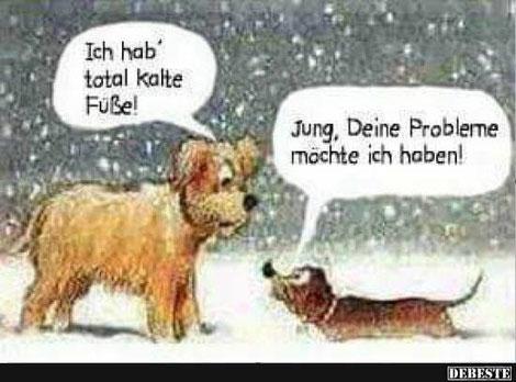 Hundesalon in Erfurt - Gesundheit´s Tipps - WENN MEIN HUND ERKÄLTET IST