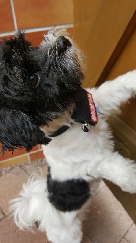 Hundesalon in Erfurt - Meine erste Hundepflege