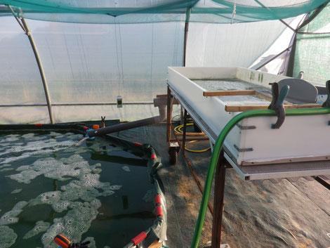Photographie de la table de récolte. L'eau filtrée retourne dans la bassin