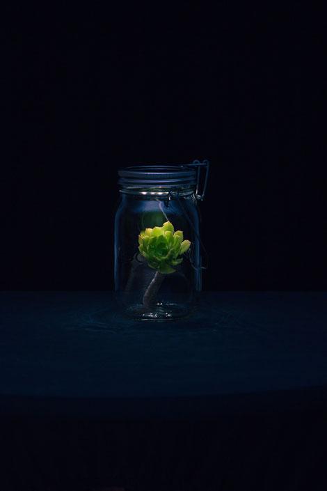 Sonnenglas mit Pflanze