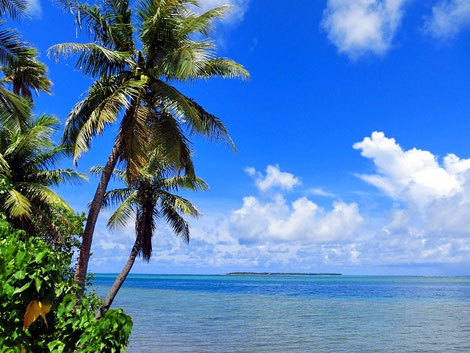 常夏の海と島の画像