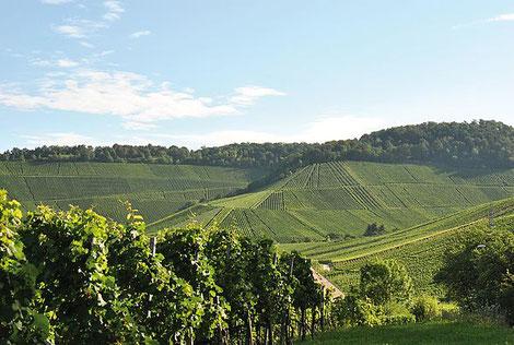 Idyllischer Blick auf die Stuttgarter Weinberge, die uns während der Wanderung begegnen; Foto: ©Stuttgart Marketing GmbH