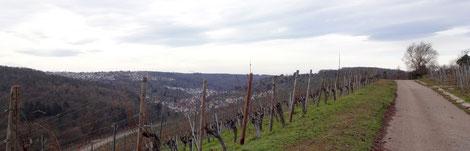 Blick von den Weinbergen der Wangener Höhe Richtung Rohracker
