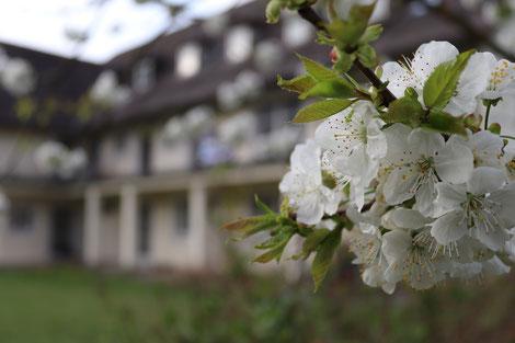 Donauvilla, Jochenstein, Hausgemeinschaft, drei Generationen, ein Zuhause, zu Hause, Mietwohnung, Wohnung, Zweizimmerwohnung, Dreizimmerwohnung, Miete, Garten, Natur, Gartenmitbenutzung, Gemeinschaft