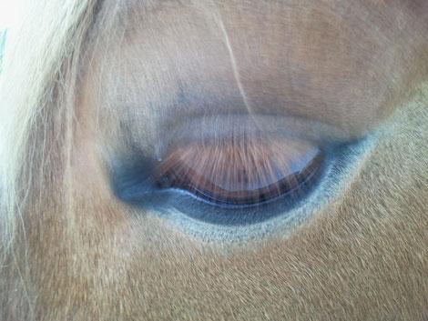 Hellsehen - Pferd - Wahrnehmungstypen