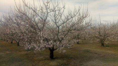 Marche Randos Canetoises à Canet , jardins familiaux, rec del Moli le 20 mars 2018
