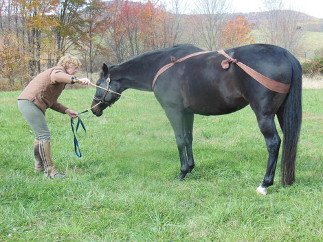 Lowering a horse's head TTouch body wrap