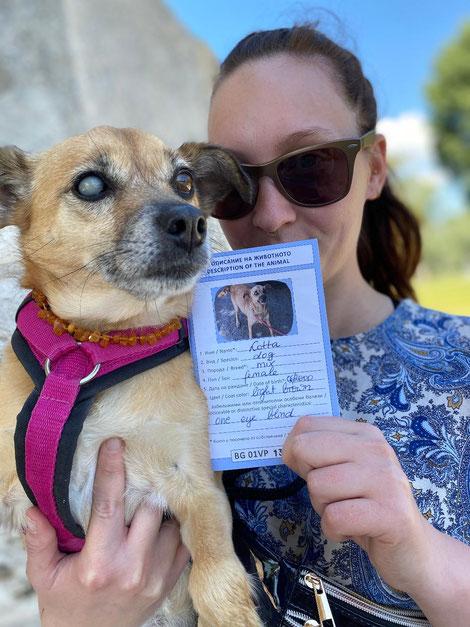 Laut der öffentlichen bulgarischen Behörden sollte dieser Hund angeblich schon 20 Jahre alt sein... eigentlich eine absurde Angabe.