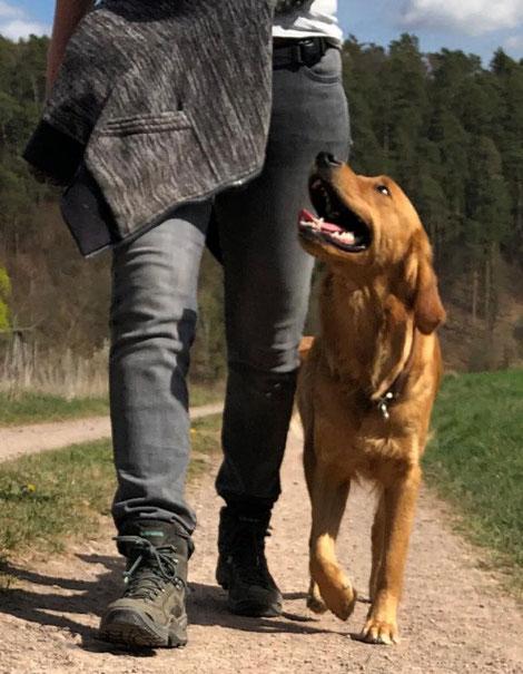 Hundeschule Marburg