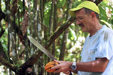 Johannes Wagenknecht beim Öffnen einer Kakaoschote