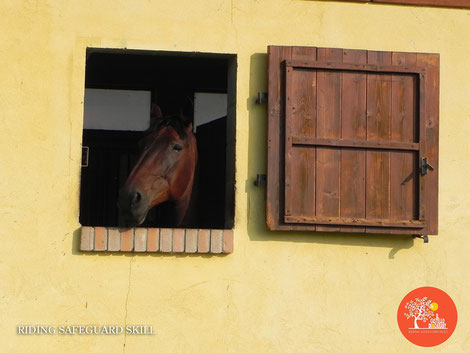 Sicurezza a cavallo negli sport equestri, addestramento delle arti marziali per la pratica sportiva