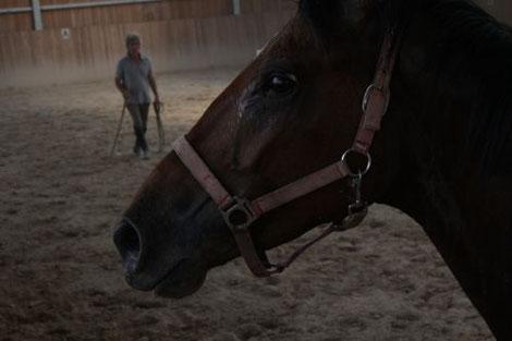 Equitazione e arti marziali, sicurezza a cavallo, esercizi